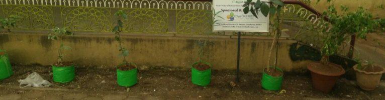 Aug 2017 – Tree Plantation Drive in Chennai